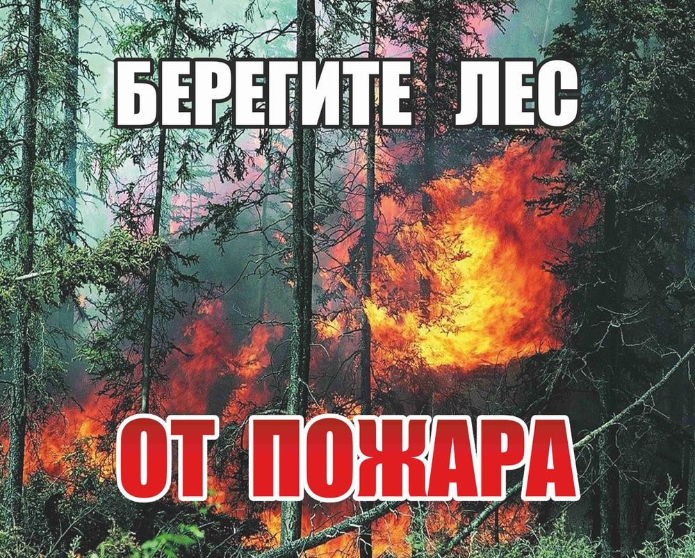 зимняя лесные пожары плакат нашей фотостудии